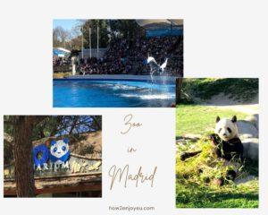 Read more about the article マドリード動物園&水族館 【Zoo Aquarium de Madrid】は大人も楽しめるスポット